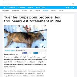 Tuer les loups pour protéger les troupeaux est totalement inutile