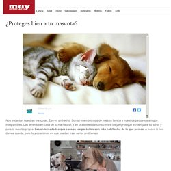 ¿Proteges bien a tu mascota? - muyinteresante