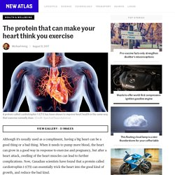 The protein that can make your heart think you exercise