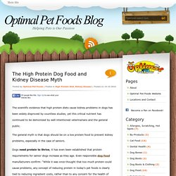 The High Protein Dog Food and Kidney Disease Myth