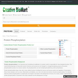 Protein Phosphorylation
