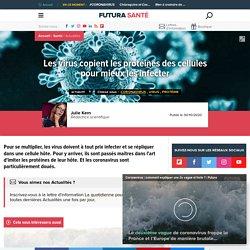 Les virus copient les protéines des cellules pour mieux les infecter