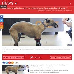 Prothèse imprimée en 3D : la solution pour les chiens handicapés ?