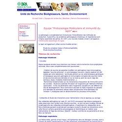 """INRA TOURS - Equipe """"Protozoologie Moléculaire et immunité du lapin"""""""