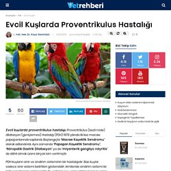 Evcil Kuşlarda Proventrikulus Hastalığı - Evcil Kuşlar - VetRehberi