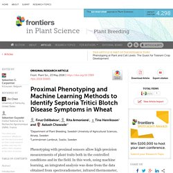 FRONT PLANT SCI 23/05/18 Proximal Phenotyping and Machine Learning Methods to Identify Septoria Tritici Blotch Disease Symptoms in Wheat