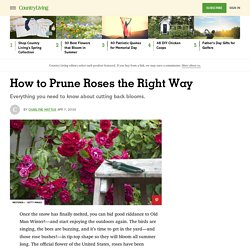 How to Prune Roses - Best Ways to Cut Back Flowers