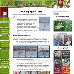 Pruning Apple Trees – A few Basic Guidelines with Pictures
