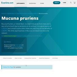 Mucuna pruriens - Scientific Review on Usage, Dosage, Side Effects