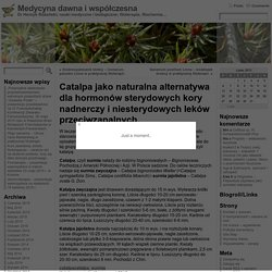 Catalpa jako naturalna alternatywa dla hormonów sterydowych kory nadnerczy i niesterydowych leków przeciwzapalnych. « Medycyna dawna i współczesna