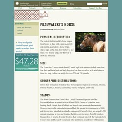Przewalski's Horse Facts