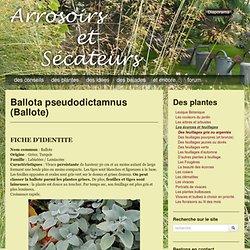 Ballota pseudodictamnus (Ballote)