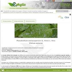 INRA - 2017 - EPHYTIA - Pseudoidium neolycopersici (L. Kiss) L. Kiss - Oïdium externe