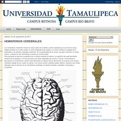 PSICOPEDAGOGIA: HEMISFERIOS CEREBRALES