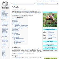 Psilocybe
