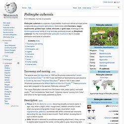 Psilocybe cubensis