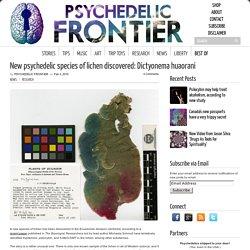 New psychedelic species of lichen discovered: Dictyonema huaorani