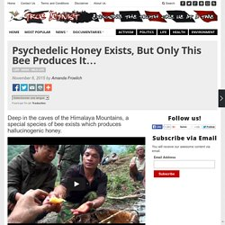 Psychedelic Honey Exists, But Only This Bee Produces It...