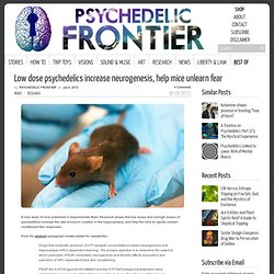 Low dose psychedelics increase neurogenesis, help mice unlearn fear