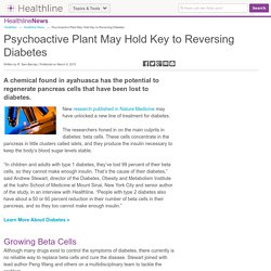 Psychoactive Plant May Hold Key to Reversing Diabetes