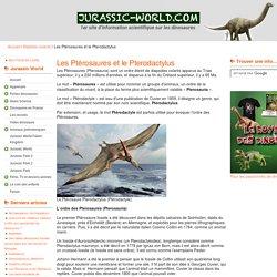 Ptérosaures et Pterodactylus (Ptérodactyle) : un ordre et un genre