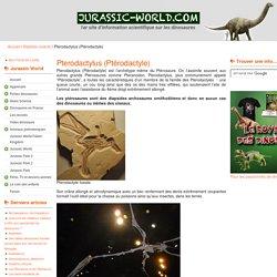 Pterodactylus (Ptérodactyle) : fiche sur ce reptile volant