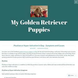 Ptyalism or Hyper-Salivation in Dog – Symptoms and Causes – My Golden Retriever Puppies