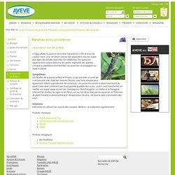 Le puceron noir de la fève > Avevewinkels > Insectes dans le jardin