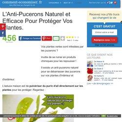 L'Anti-Pucerons Naturel et Efficace Pour Protéger Vos Plantes.