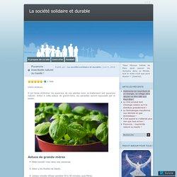 Pucerons : insecticide naturel au basilic !