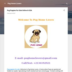 Pug Puppies For Sale Online In USA