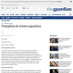 Growing your own: Pumpkins & winter squashes