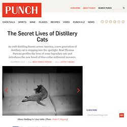The Secret Lives of Distillery Cats