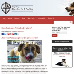 Does Punishing A Dog Really Work? - The Guild of Shepherds & Collies
