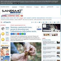 Sanremo, punteruolo rosso, pronte le procedure per l'abbattimento delle palme morte-Quotidiano online della provincia di Imperia