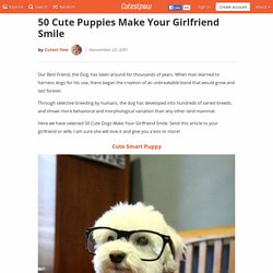 50 Cute Puppies Make Your Girlfriend Smile