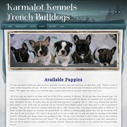 Puppies - Karmalot Kennels French Bulldogs