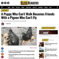 A Puppy Who Can't Walk Becomes Friends With a Pigeon Who Can't Fly