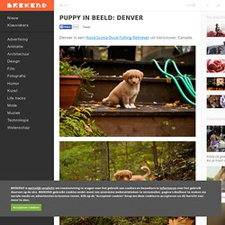 Puppy in beeld: Denver