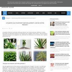 6 plantes qui purifient naturellement l'air de votre maison ! ~ Savoir Vivre