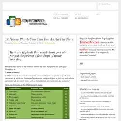 House Plants Air Purifiers