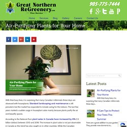 Air-Purifying Plants for Your Home
