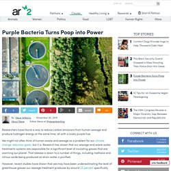 Purple-bacteria-turns-poop-into-power