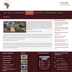 PUSH NEW YORK AFRICA SAFARIS - Lion Safaris
