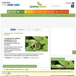 Pyrale du buis : traitement contre la chenille verte