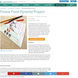 Forest Food Pyramid Project