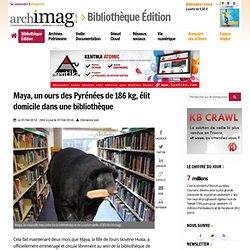 Maya, un ours des Pyrénées de 186 kg, élit domicile dans une bibliothèque