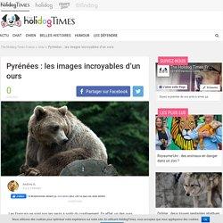 Pyrénées : les images incroyables d'un ours