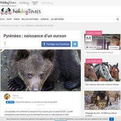 Pyrénées : naissance d'un ourson