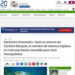 Pyrénées-Orientales: Dans la réserve de Cerbère-Banyuls, le nombre de mérous explose et c'est une bonne nouvelle pour tout l'écosystème 29 juin 2020